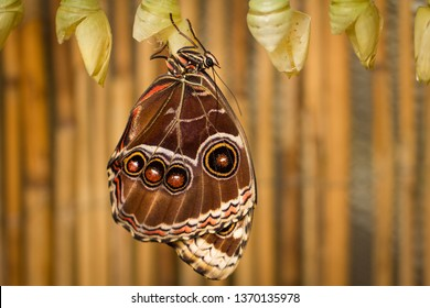 Single and isolated butterfly. Amazing detailed shot of this fragile yet beautiful colorful and interesting insect.
