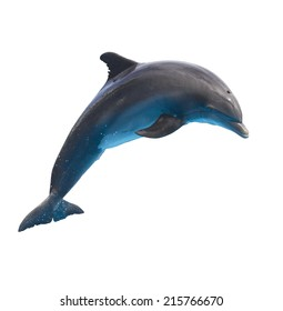 single jumping  bottlenose dolphin isolated on white background