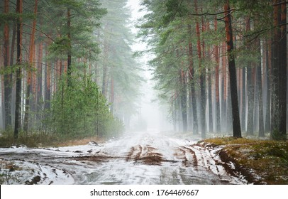 Single lane rural road (pathway) through the pine forest in a white mist. First snow. Atmospheric autumn landscape. Finland