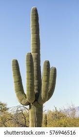 A single large saguaro cactus seemingly making a humorous obscene middle finger gesture.