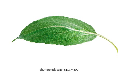 single leaf images stock photos vectors shutterstock