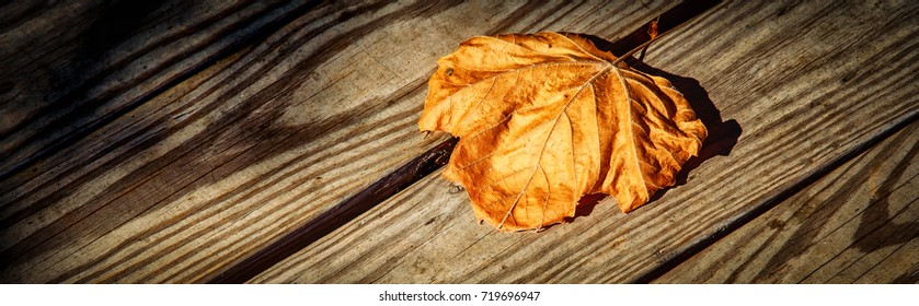 A single leaf laying on a wooden deck, the end of summer is near in Occoquan, Virginia.