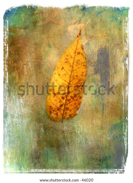 Single leaf. Mix Media Photo illustration.