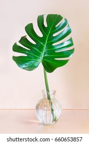 Single leaf of Monstera plant in vase on pink background. Concept and minimalism.