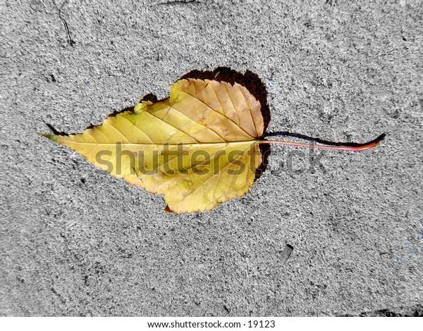 Single leaf on cement.