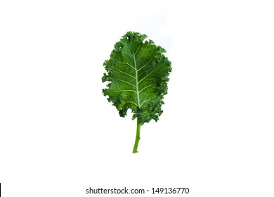 Single leaf of organic green kale on white background