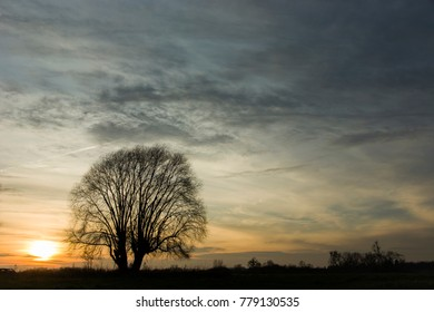 Single leafless tree. Sunset and colorful clouds