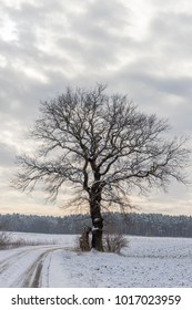 Single leafless tree in winter with gray clouds in the background