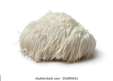 Single Lion's mane mushroom on white background