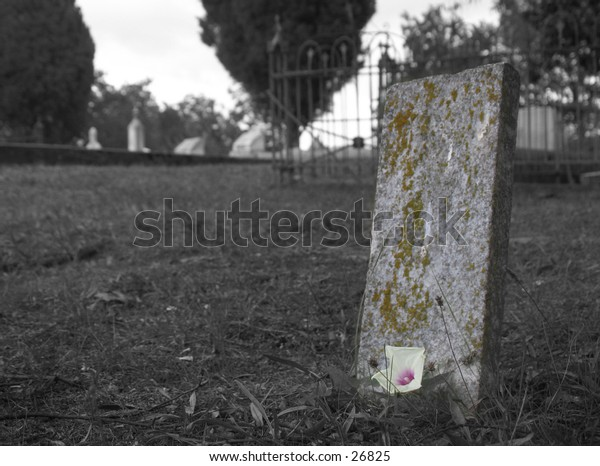 single live morning glory flower on an old weathered tombstone in a cemetery