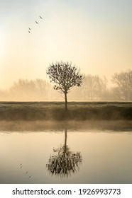 Single lone tree at dawn sunrise standing on river bank with mist and fog rising from canal birds flying in formation above reflected in calm still water foggy misty forest in landscape background