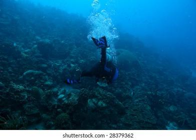 single male scuba diver in wetsuit in vivid blue caribbean waters of bonaire, dutch antilles