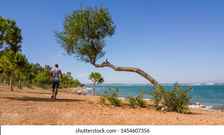 Single man in shorts and t-shirt walking on an unimproved road with trees near the sea on a windy summer day.