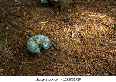 Single mushroom growing on forest floor