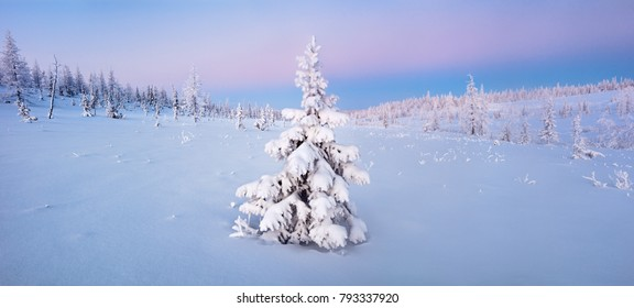 Single New Years fir tree in the snow winter forest  in blue tones panorama web banner or print