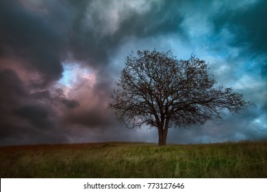A single oak tree on a grassy hill with stunning high contrast clouds in the sky.