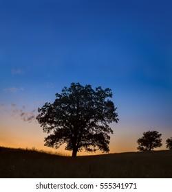 A single oak tree on the prairie horizon done