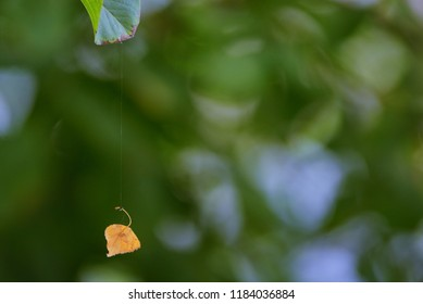 Single old leaf hanging on spiderweb in a forest