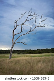 A single old tree against a moddy thunderstorm sky, South West Australia