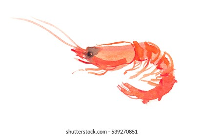 Single orange shrimp painted in watercolor on clean white background