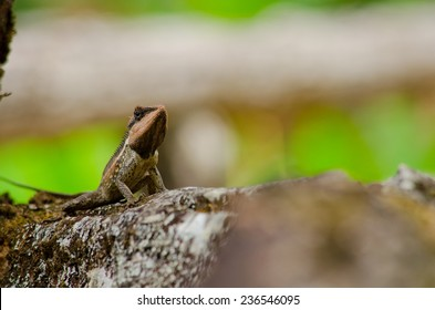single orange spiny lizard sitting on the tree