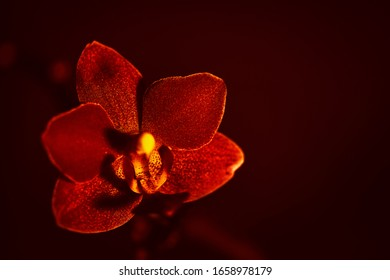 Single orchid with dark background for writing