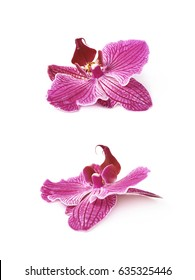 Single orchid flower isolated over the white background, set of two different foreshortenings