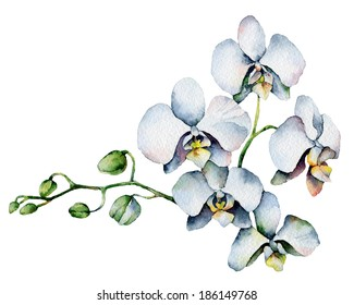Single orchid isolated on white background. Watercolor Painting