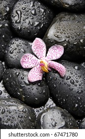Single of orchid on pebble in water drops