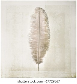Single Ostrich feather on vintage textured background.