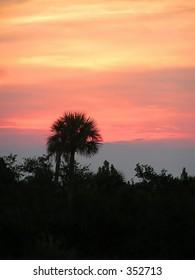 single palm silhouette