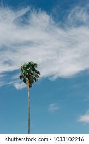 Single Palm Tree Against Blue Sky