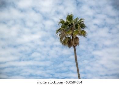 Single palm tree against a cloudy sky