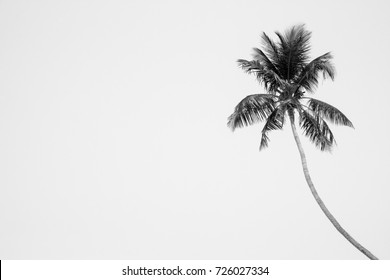 Single palm tree black and white background