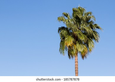 Single palm tree blowing in the wind against a clear deep blue sky.