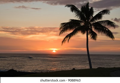 Single Palm tree framing a Hawaiian Sunset