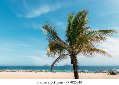 Single palm tree with out of focus Ipanema beach in Rio de Janeiro, Brazil background