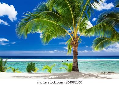 A single palm tree overlooking tropical beach on Rarotonga, Cook Islands