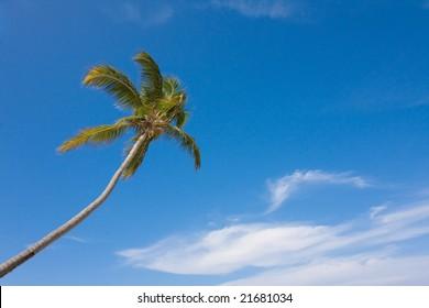 Single palm-tree.