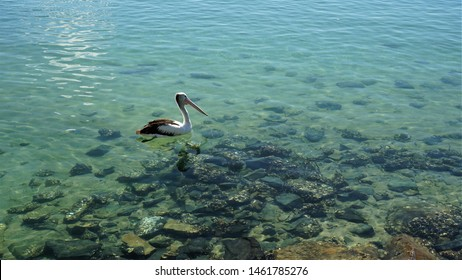 Water Gliding Images, Stock Photos & Vectors | Shutterstock