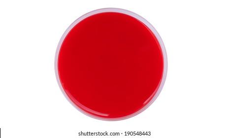 Single petri dish, isolated on white background - columbia blood agar