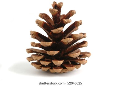 single pine cone, isolated