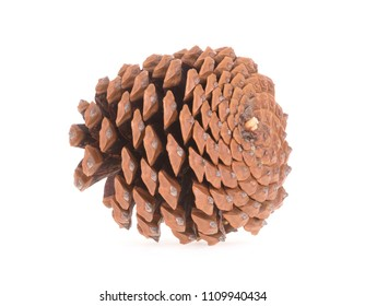 Single pine cone isolated on a white background