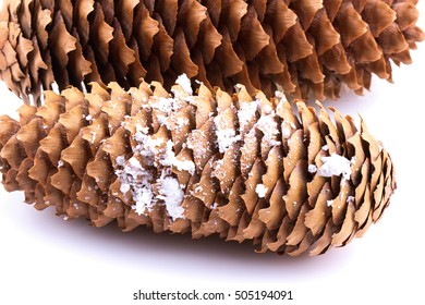 Single pine cone isolated on white background