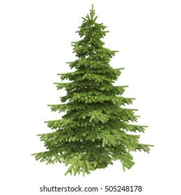 Single pine tree isolated on white background. 3D illustration. High quality