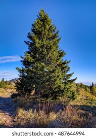 Single pine tree in the mountains - symmetrical autumn landscape