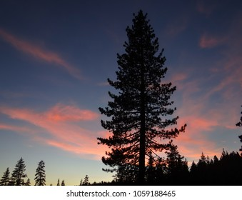 A single pine tree is silhouetted against a sunset sky in the California mountains, a beautiful sight of blue and orange colors.