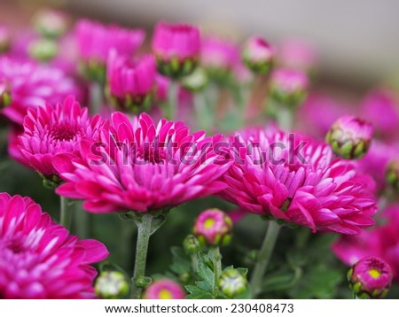 Single Pink Flowers Natural Background Stock Photo Edit Now
