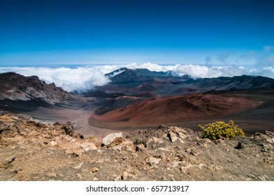 A single plant with yellow flowers clings to the rocks on the edge of the caldera and clouds creep into the Caldera at Haleakala