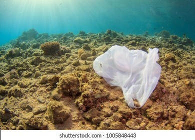 Single plastic trash bag on dead coral reef